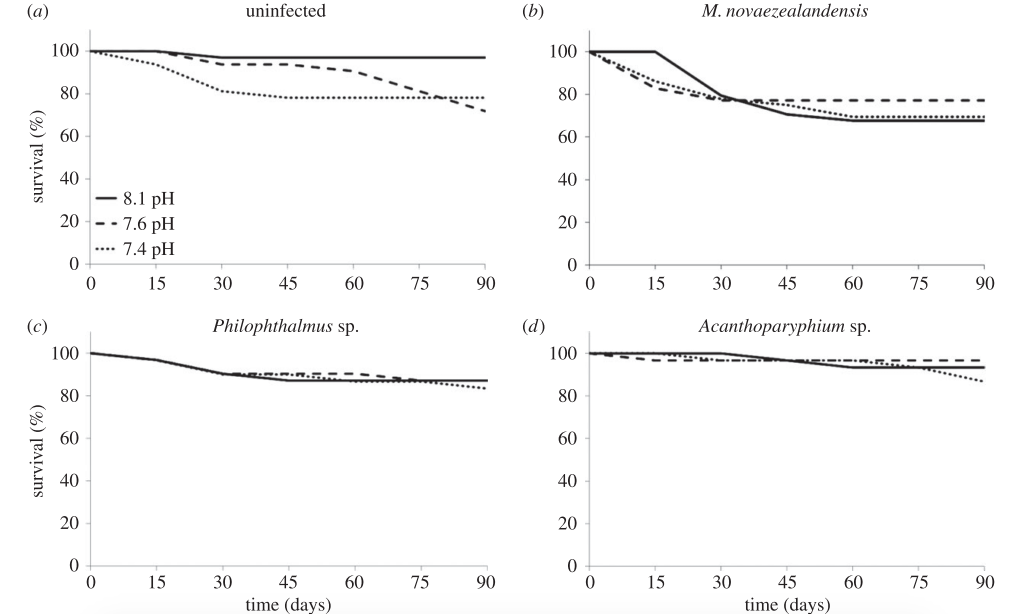 Figure 2:  Mortality curves for the four groups of snails, with a) being the uninfected snails, and the remaining panels being snails infected with (b) M. novazealandensis, (c) Philophtahlmus sp, or (d) Aconthoparyphium sp.  Source: MacLeod & Poulin 2016.