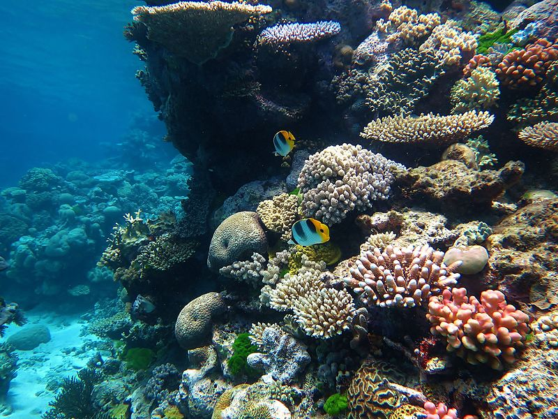 Do coral reefs help fight climate change?