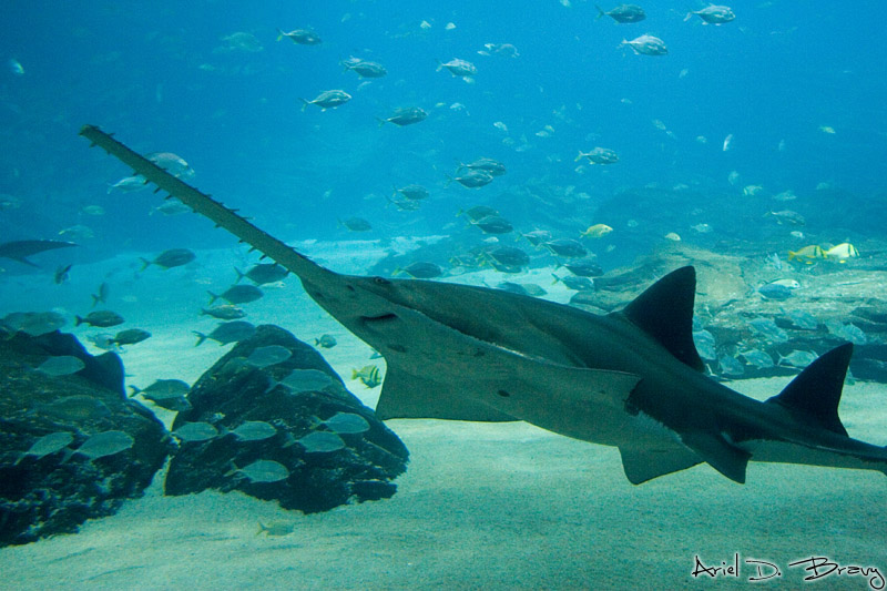 Shark (and fish, reptiles, and amphibians) Week for Scientists II: Notes from the Joint Meeting of Ichthyology and Herpetology 2016