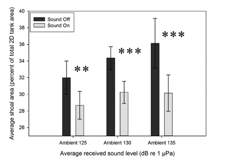 Fig. 5: This graph show the group cohesion based on 3 levels of ambient sound, both during and after the sounds are played. The black bars show that cohesion is higher when ambient sounds are turned off.
