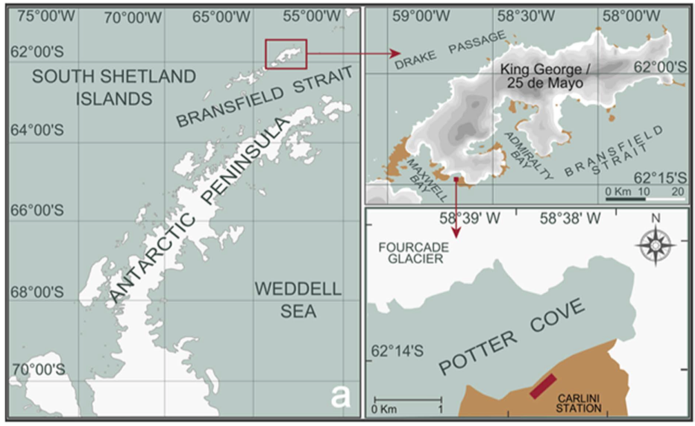 Figure 1 - Map of area where krill were stranded. King George Island is just north of the Antarctic Peninsula and is almost entirely covered by a glacier. The shoreline where krill were found stranded is across Potter Cove to the south of Fourcade Glacier. When strong winds blow from the north, more sediment particles from glacier meltwater streams enter the cove. (Figure 1a in the paper.)
