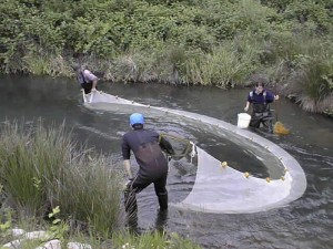 Figure 3: An example of scientists using a seine net to capture fish.