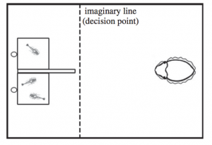 Figure 2. Top view of the experiment tank. The two chambers on the left are filled with varying numbers and types of shrimp, and the cuttlefish is required to make a decision as it approaches. (Source: Yang & Chiao, 2016)
