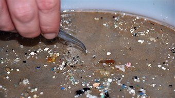 Finding Nemo was right: what you flush down the drain can impact ocean creatures