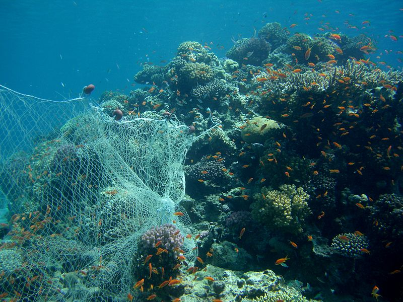 Fig. 4. Fishing net on coral reef. Source: Wikimedia Commons, author Tim Sheerman-Chase.