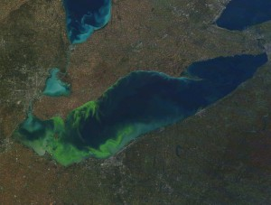 A MODIS (moderate-resolution imaging spectroradiometer) satellite image of Lake Erie. Depending on the type of algae being studied, scientists can sometimes use the colour of the water to estimate its concentration. [NOAA Great Lakes Environmental Research Laboratory, Flickr]