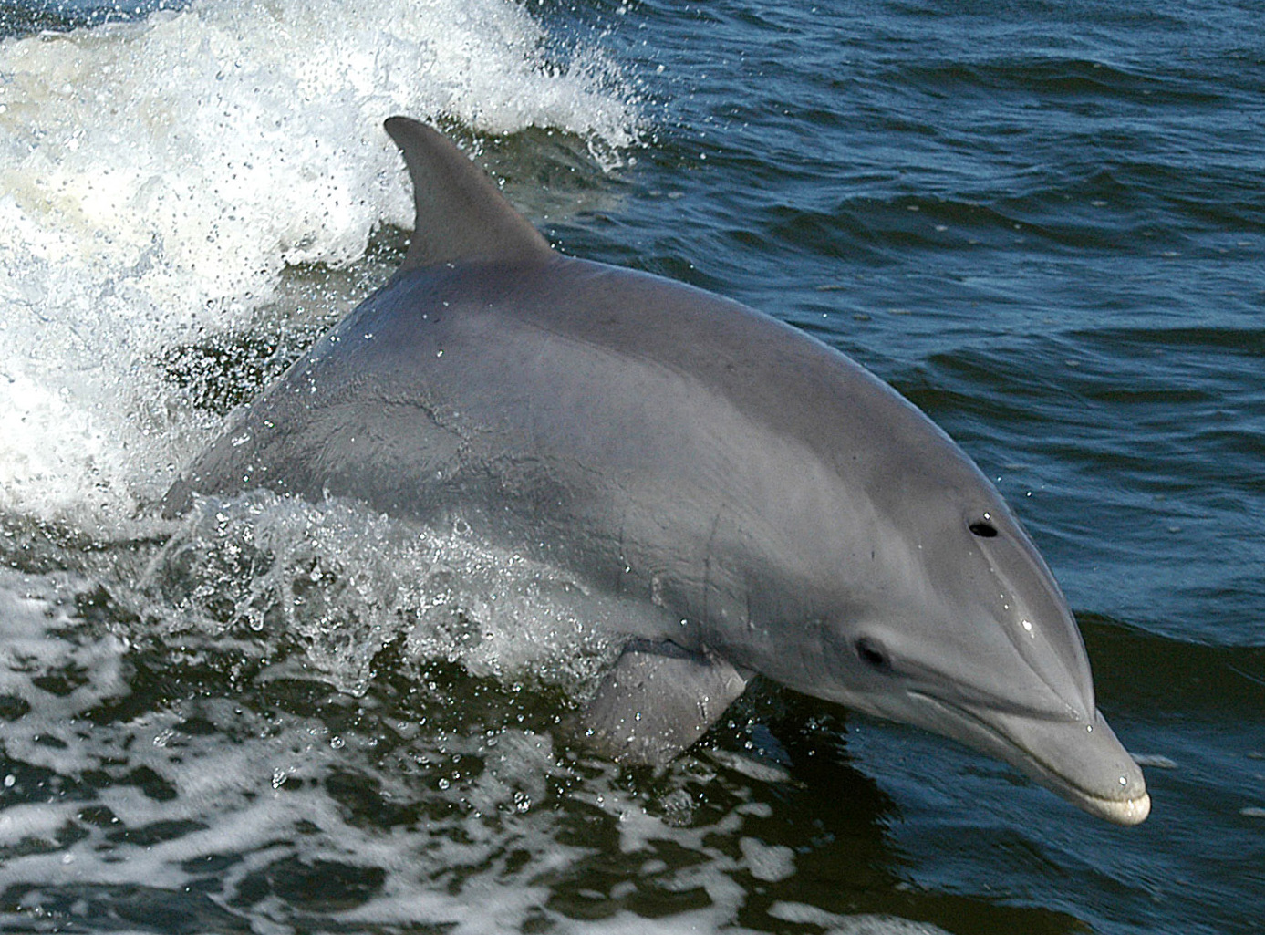 Rachel Carson had the right idea: DDT persists in unexpected ways in dolphins