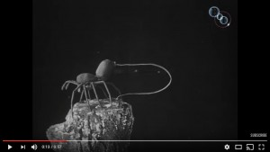 Video made in 1909 (!) demonstrating ballooning using a mechanical spider.