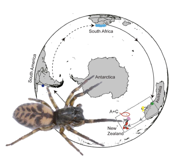 Swashbuckling spiders sailed the high seas