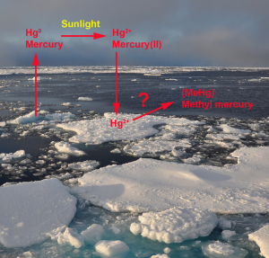 Where is all the methyl mercury coming from?! (Creative Commons photo by Patrick Kelley)