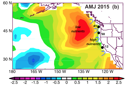 Map of sea surface temperature anomalies in April, May, and June of 2015. Blue arrows show upwelling bringing deep nutrients to the warm surface ocean, creating the perfect environment for pseudo-nitzchia to bloom. (Figure 2b in the paper.)
