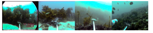 Fig. 3: Footage from the baited cameras from 2002 - 2011.