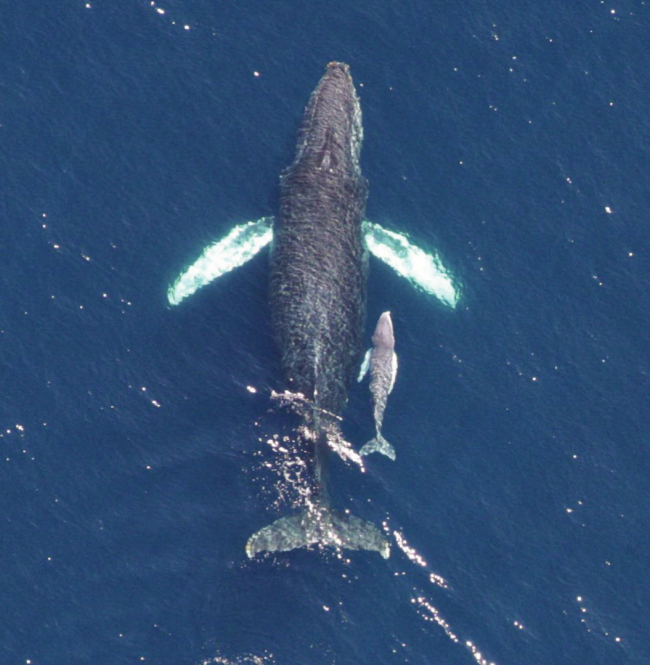 Heroic Humpbacks: Orcastrate an Escape