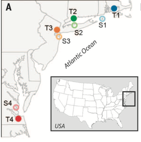 Geographic locations of populations of resistant (T) and susceptible (S) killifish sampled in this study.