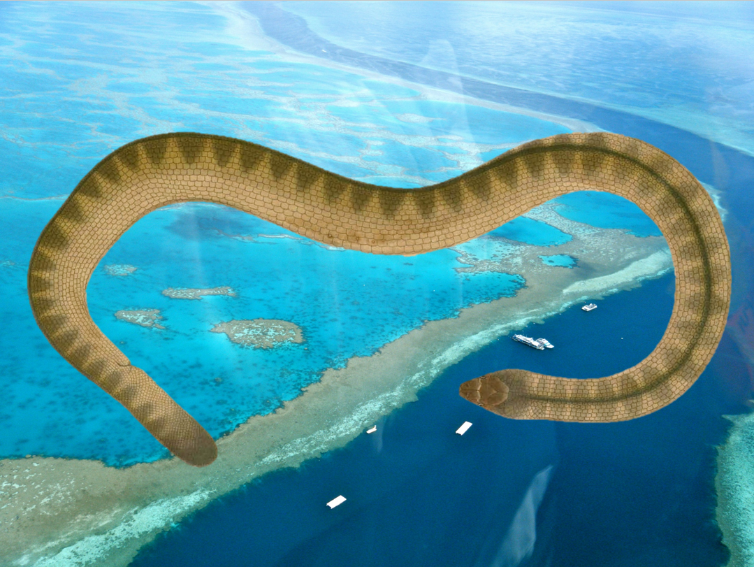 Warm water curtails sea snakes' dives