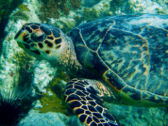 Turn off some lights for the turtles: using statistics to make turtle conservation tangible