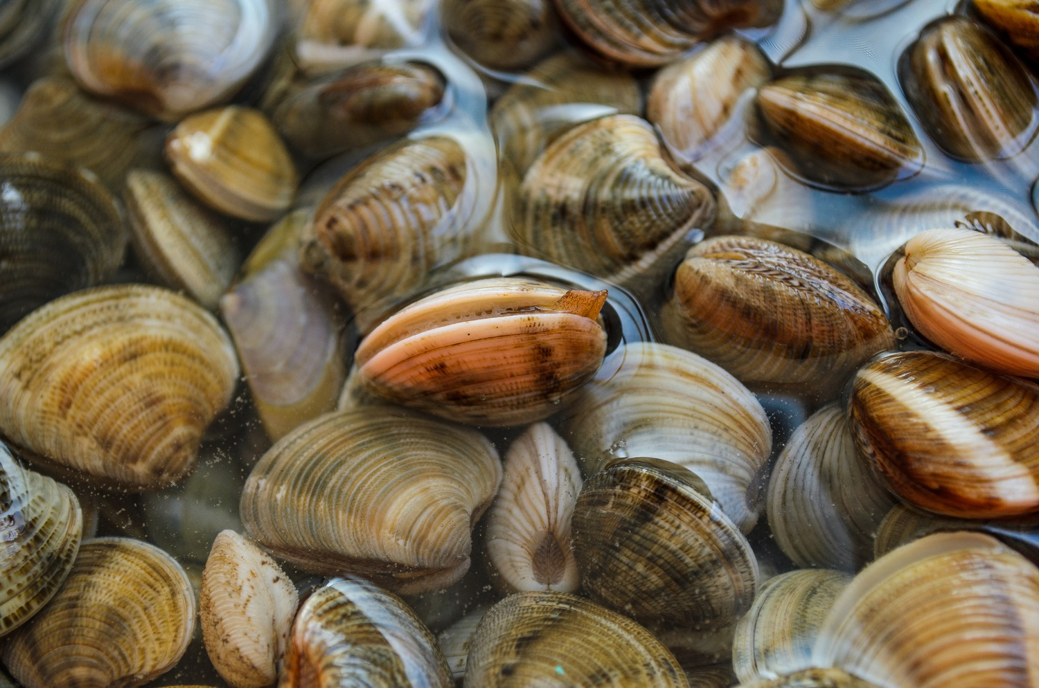 Clamate Change: How clams may be able to cope with a warming world