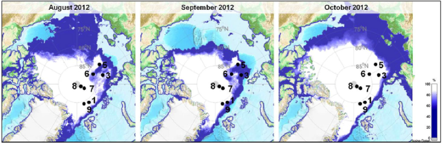 The Meltdown: Protists in the time of disappearing Sea Ice in the Arctic Ocean