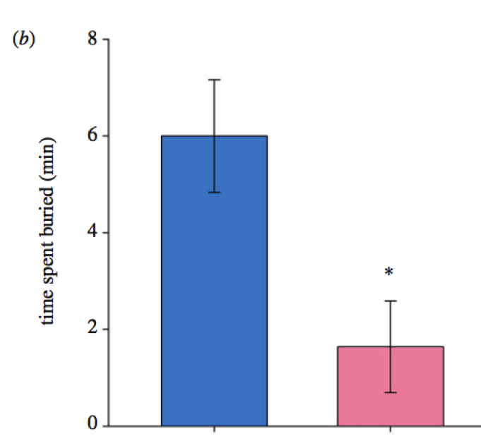 Figure 3: Graph showing the decrease in time spent buried in the sand between snails in control (blue) and more acidic (pink) water.  Control snails spent more time buried than those in high CO2. Source: Watson et al. (2017)