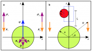 Figure 2: Mathematical models used to calculate the forces acting on each organism and the fluid surrounding them (source: Dölger et al., 2017)