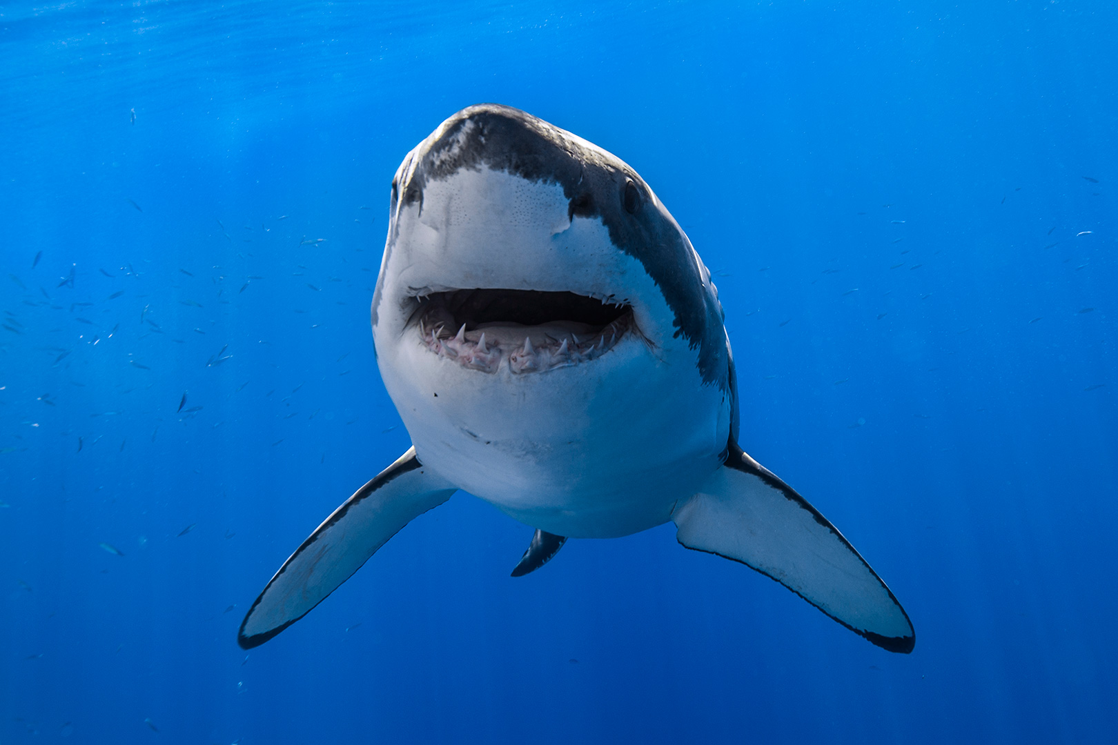 Shark attack prevention: what works, what doesn't?