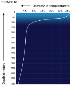 Fig 2. Graph depicting a tropical ocean thermocline. Of note is the steep decline in temperature between 100 and 1000 meters, after which temperature is nearly constant. (Wikimedia Commons)