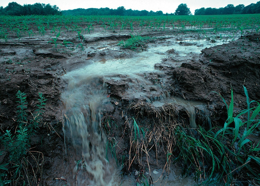 Runoff of nutrients from farm fields can harm coastal wetlands. (Credit: Lynn Betts/USDA)