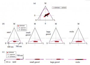 Figure 4: Color Vision and Flounder/Substrate Reflectance. Trichromatic species (humans and guitarfish) are mapped using Maxwell color triangles (a, b) while dichromatic crab vision is displayed along a line (c). Colors of substrate and chromatophores are displayed as red and black/grey dots, respectively. Adapted from Fig. 5, Akkaynak et al. (2017).