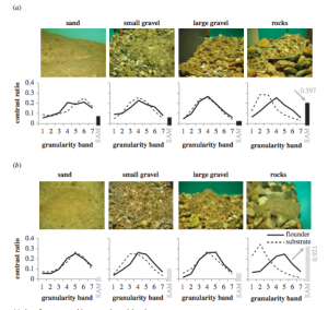 Figure 3: Granularity of Flounder vs. Substrate. a.) images and granularity measurements for summer flounder; b.) images and granularity measurements for windowpane flounder. Camouflage patterns matched on sand, small, and large gravel, but not rocks. Adapted from Fig. 8, Akkaynak et al. (2017).