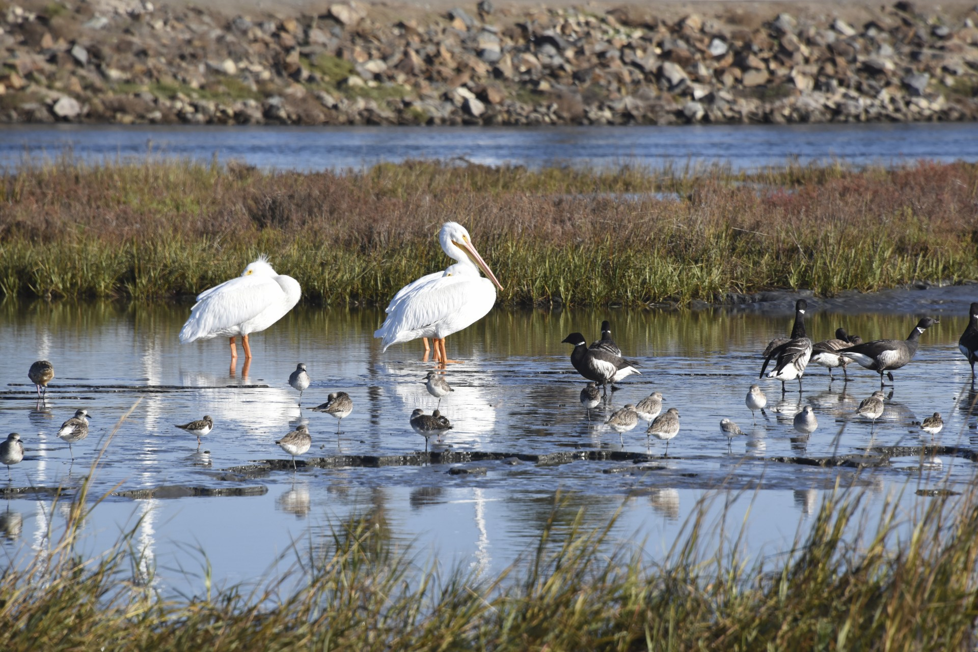 Protecting Our Fish and Birds by Protecting Their Wetland Homes