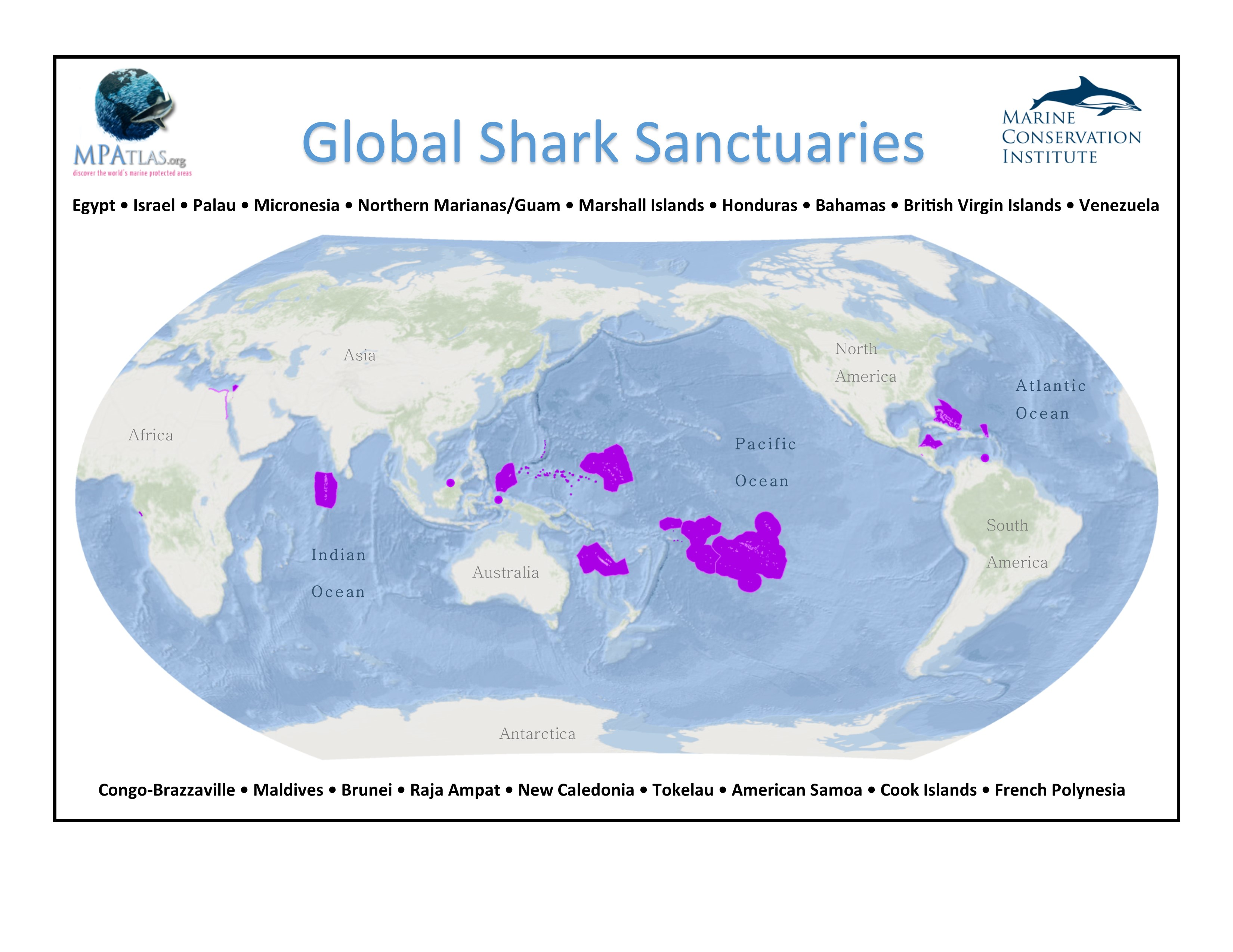 Shark Sanctuaries: Are They Enough to Save Sharks?