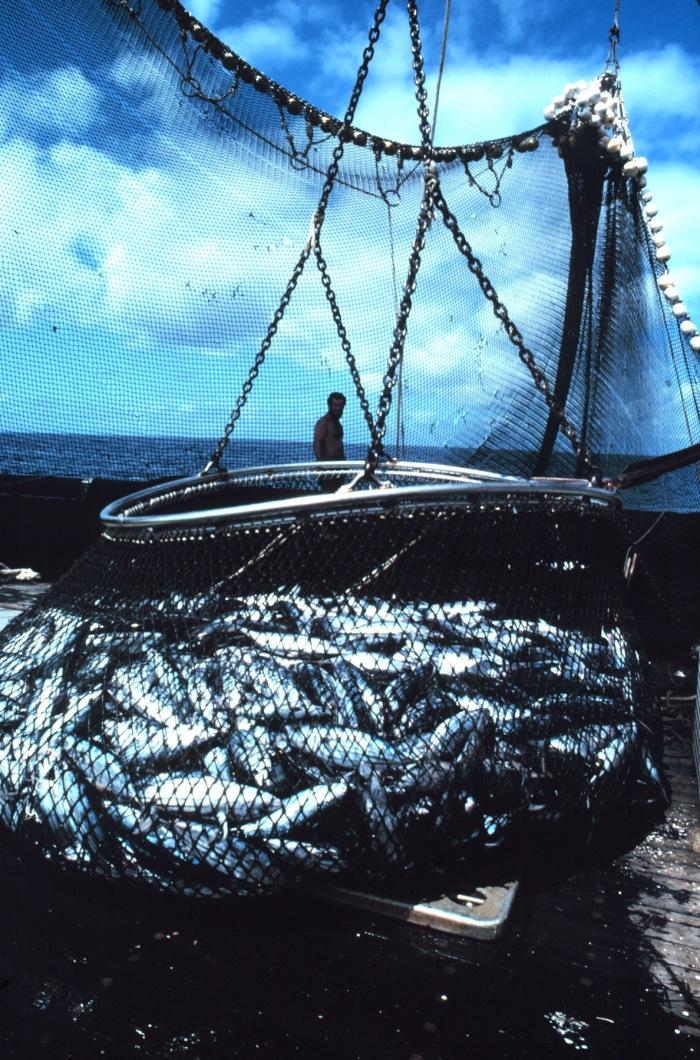Futurama: Building scenarios to sustain oceanic ecosystems and fisheries
