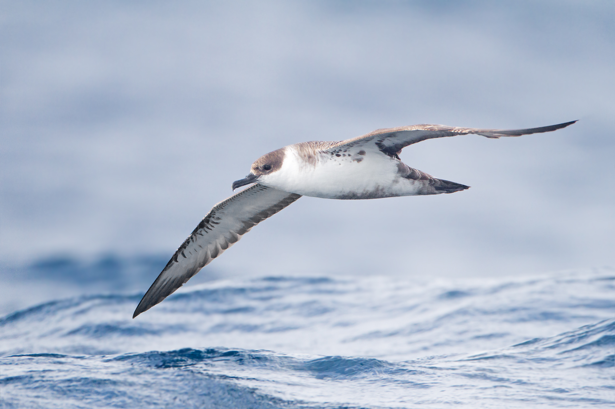More than just a game of tag: learning about seabird habitat use through tagging studies