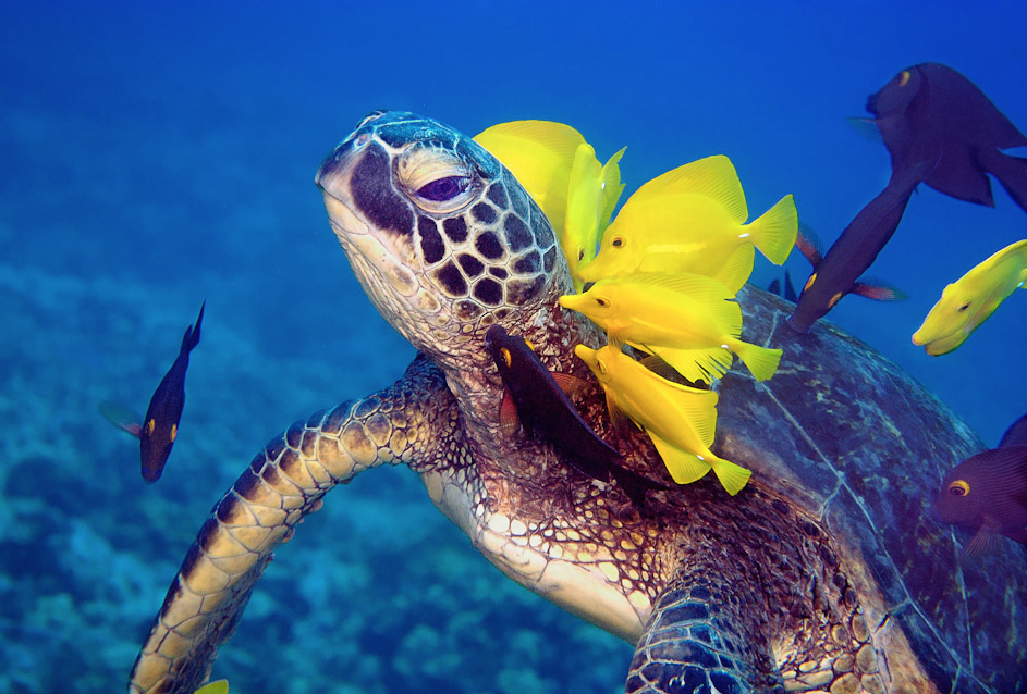 How to clean a sea turtle