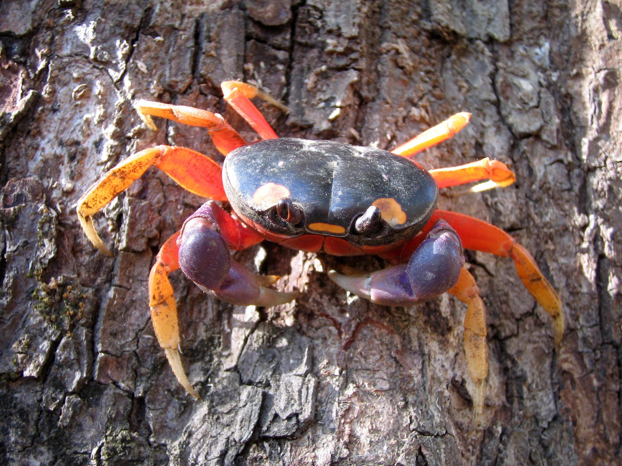Marine Halloween: Crabs Dress Up To Trick-or-Treat