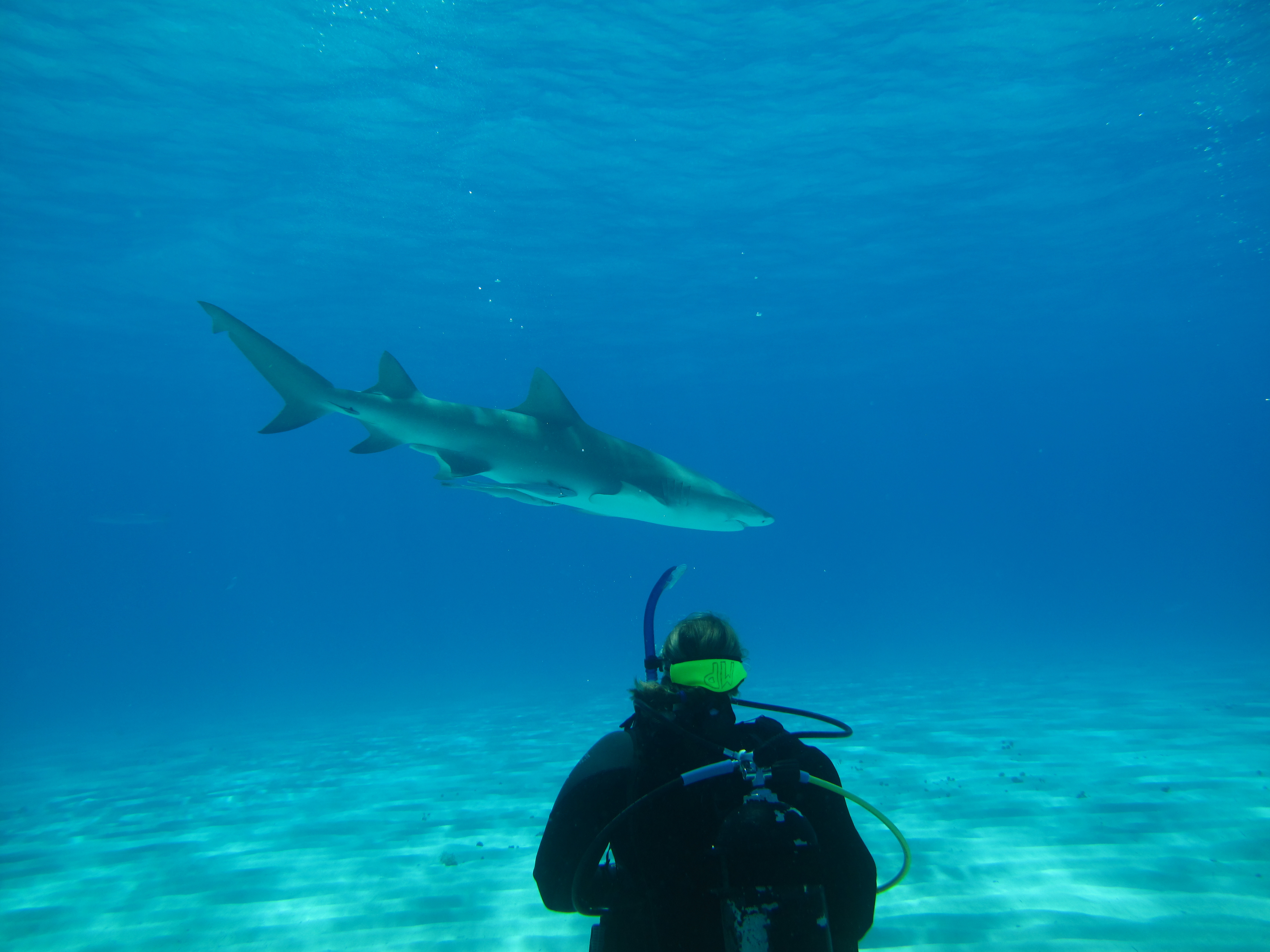 The Accidental Shark Researcher