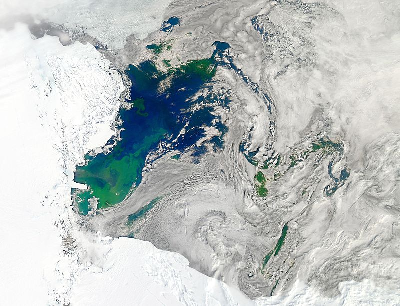 Fate of Dissolved Carbon in the Antarctic