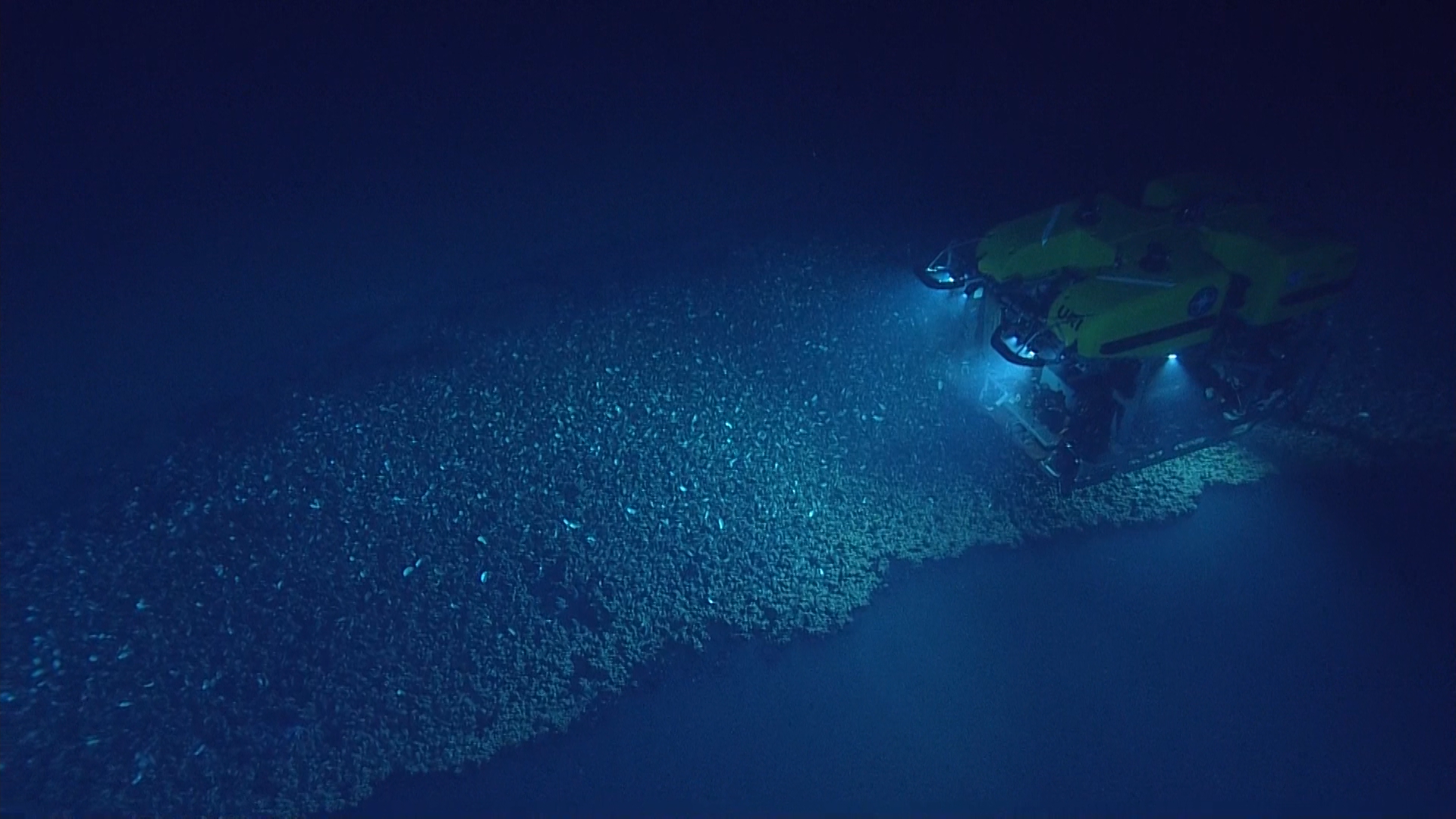 Top 5 Highlights of Deep Sea Exploration in 2017