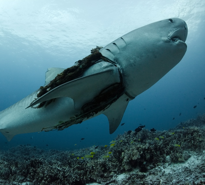 How our Fear is Killing Sharks