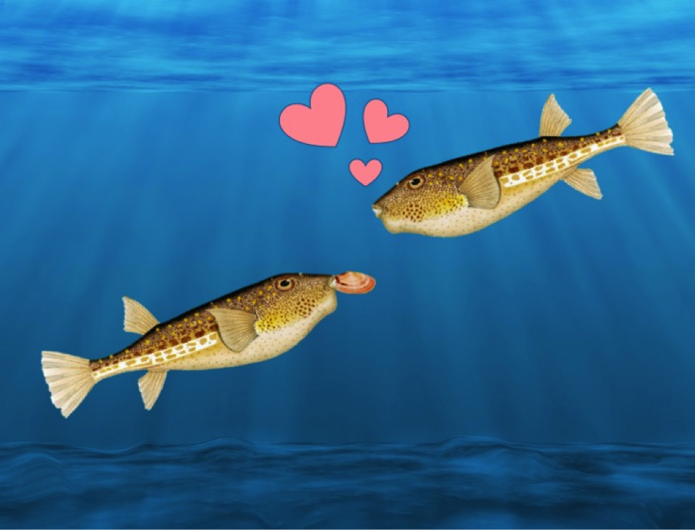 3 Courtship Tips From the Ocean: Valentine's Day Edition
