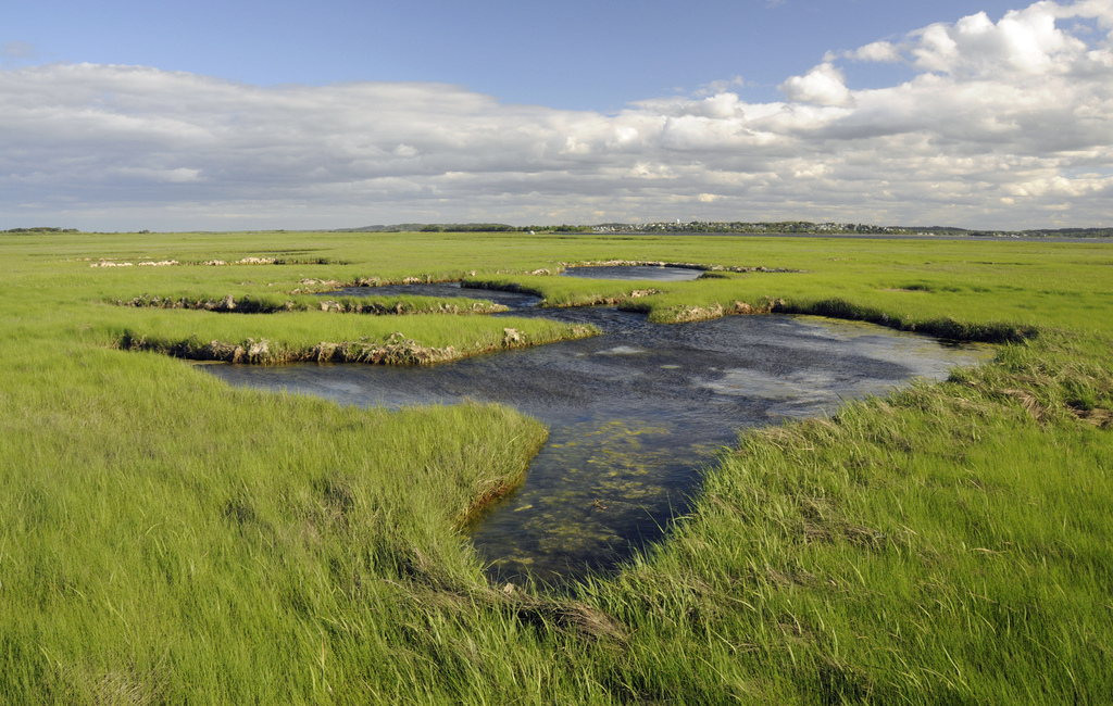 Restoring the links between land and sea