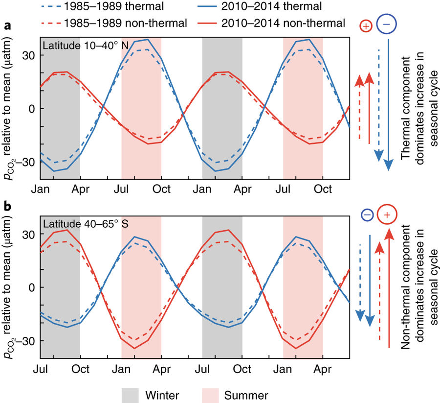 More Intense Summer to Winter Swings in Oceanic Dissolved CO2