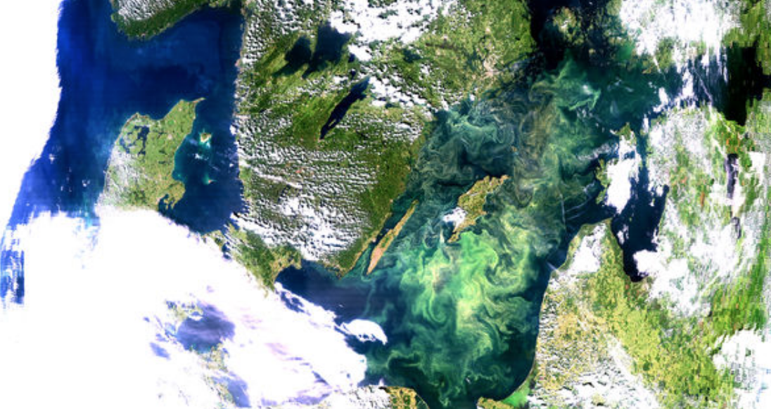 Cyanobacteria invasions… from space?
