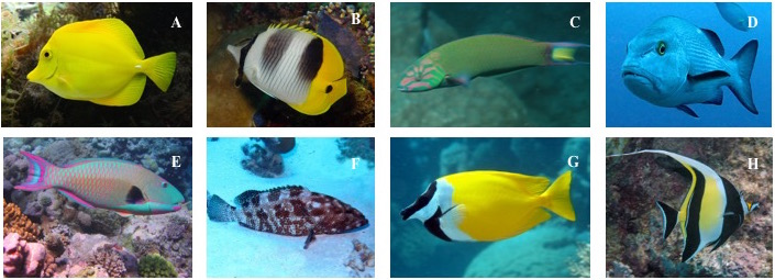 Scaredy Fish: How Timid Fish Could Skew Research