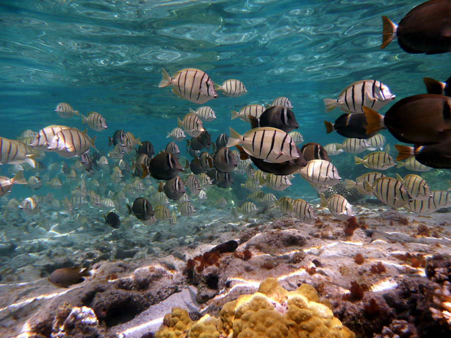 Linking marine and human health in Hispaniola