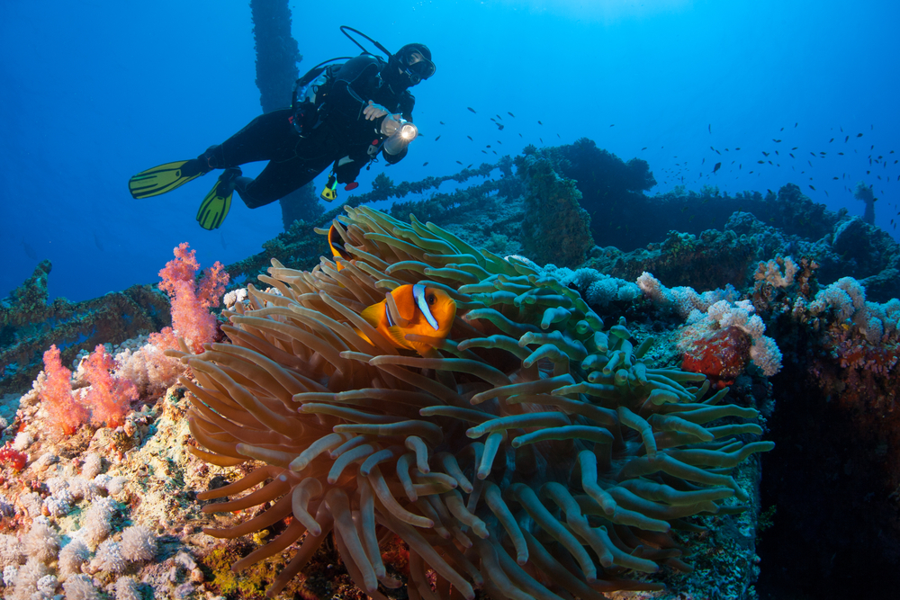 We need reefs. Can we make some?