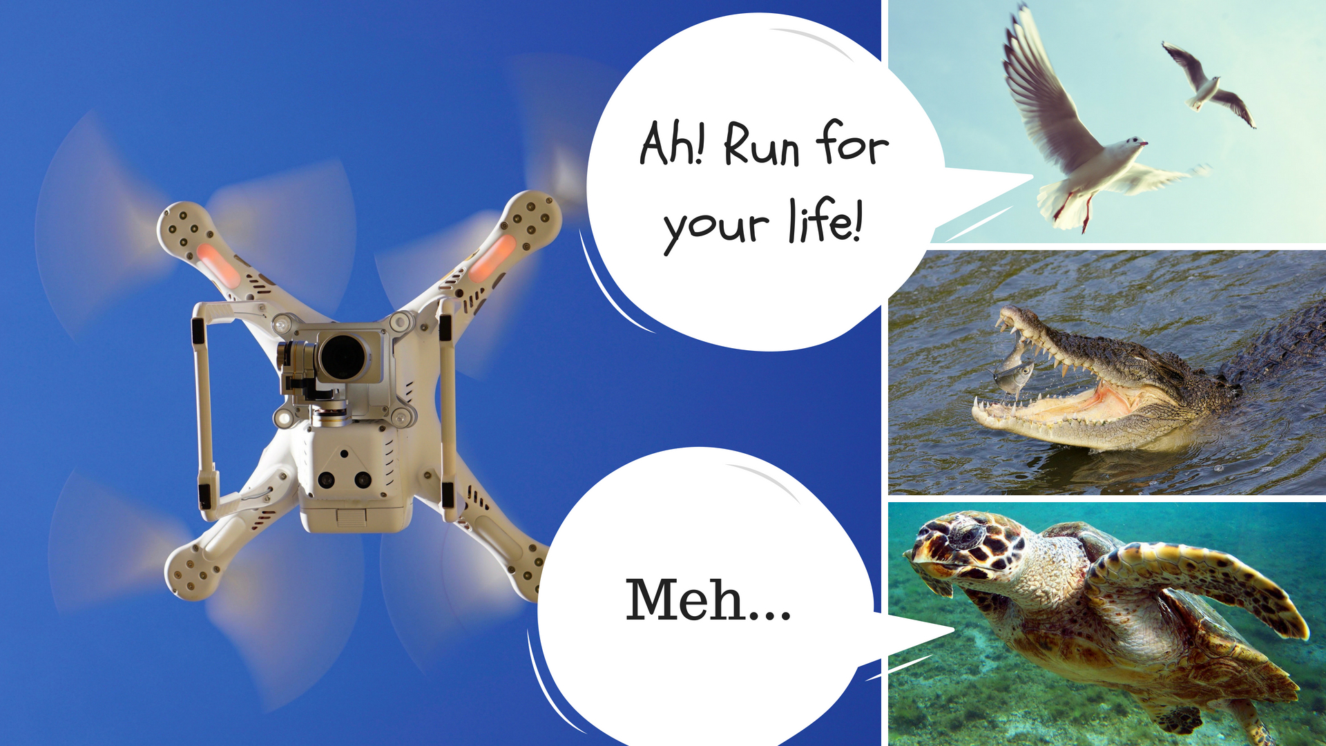 Turtles unbothered by close drone monitoring, while birds and crocodiles flee