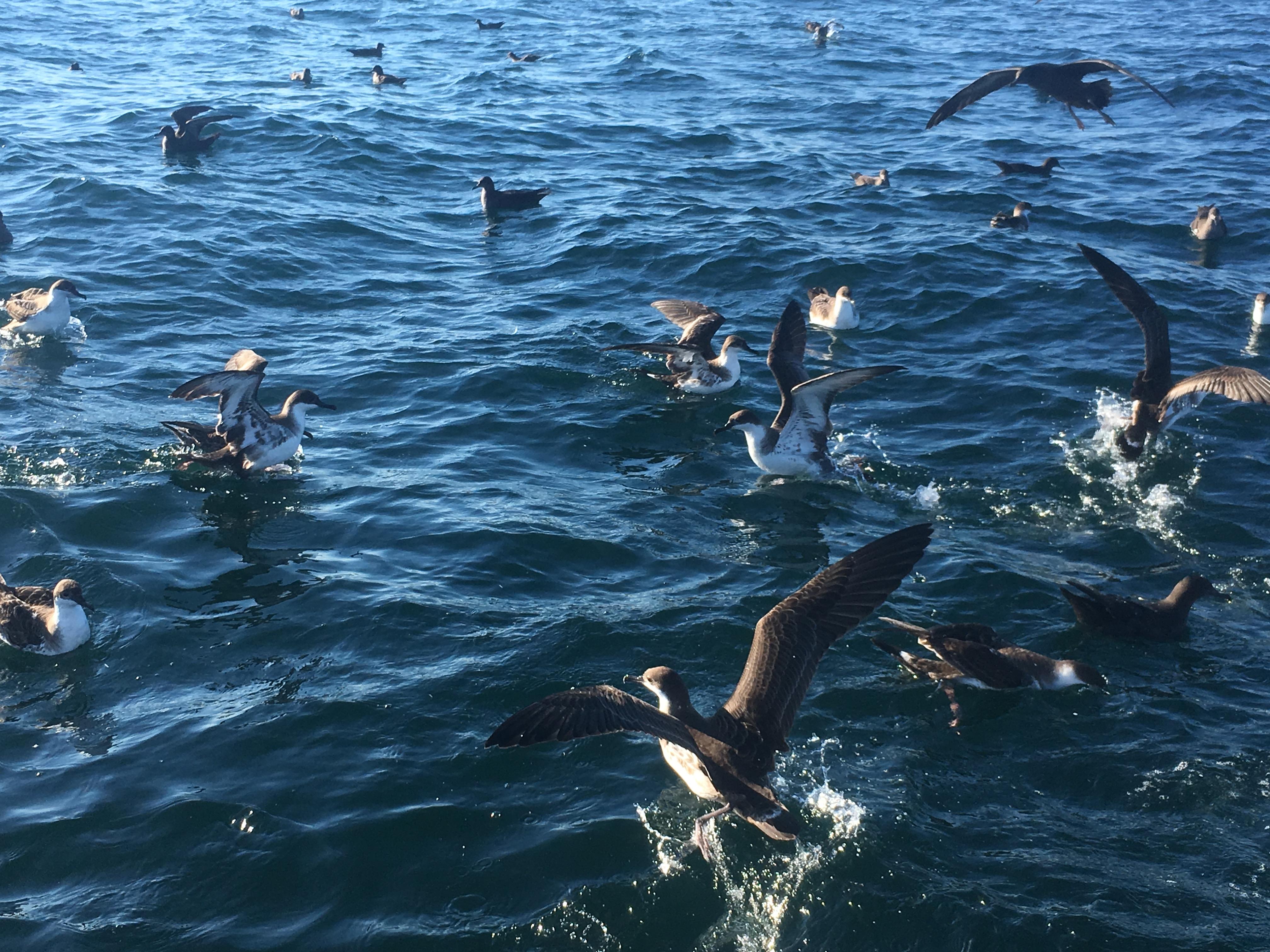 Seabird tagging 101