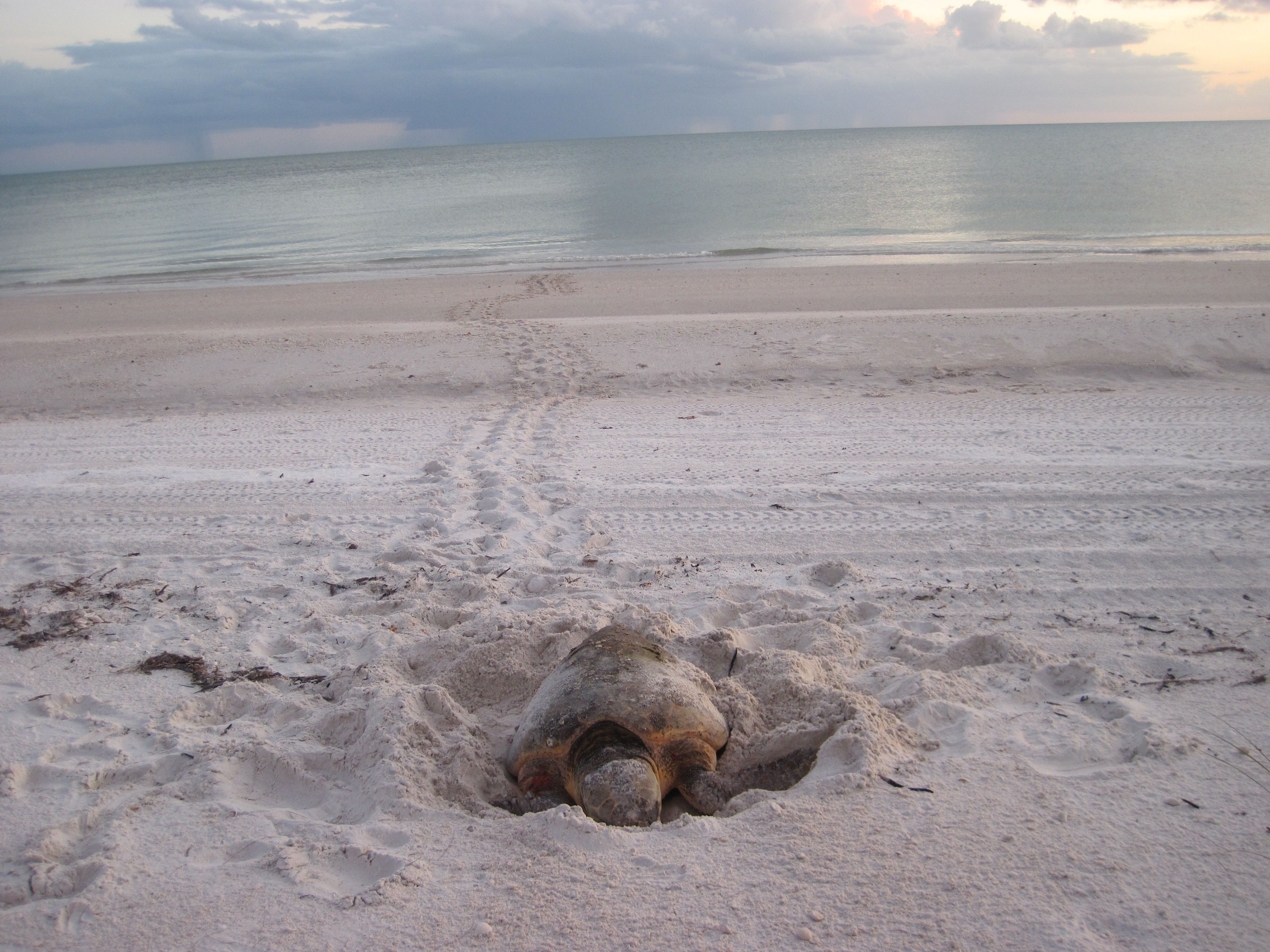 Studying Sea Turtles: The Blood, The Sweat, The Tears and More