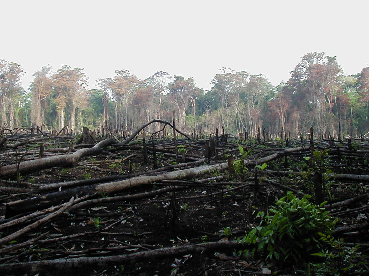 Reduction in Deforestation Influencing Atmospheric CO2